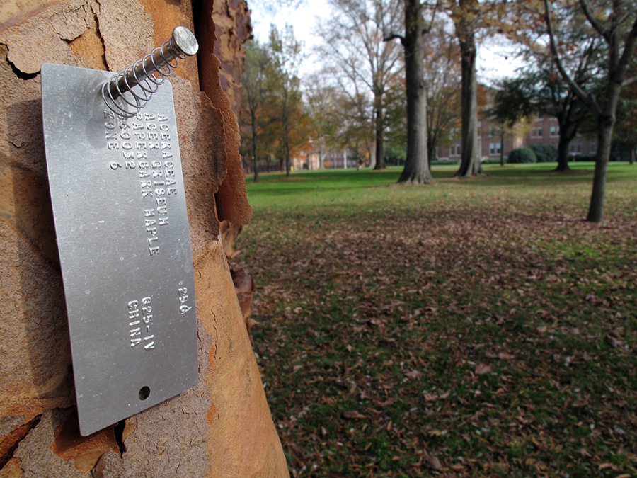 Many trees on the Davidson College campus have metal identification tags nailed to their trunks. If it's true that plants have feelings, there may be some corrolation between our treatment of non-combattant maples and the frequency with which extraterrestrials shove probes up our butts. (Click image for larger version.)