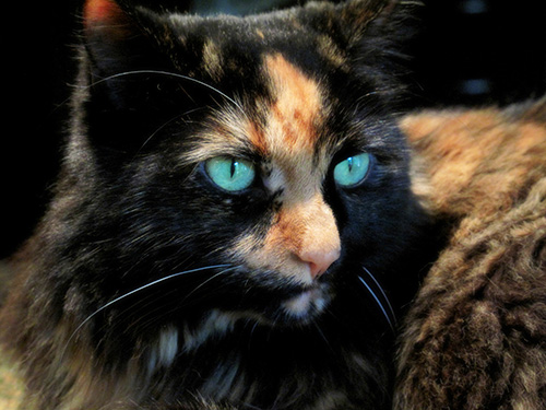 Phebe the cat. (Click to up-rez.)
