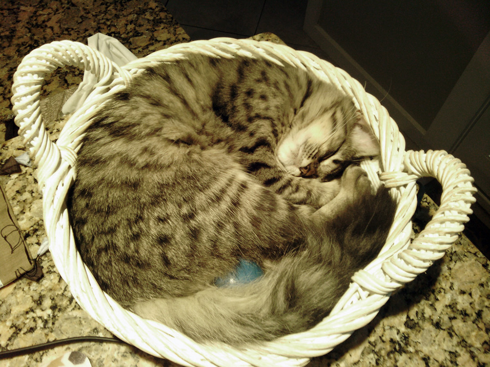 Android photo of Acadia in the basket that she appropriates at the Big Cat House.