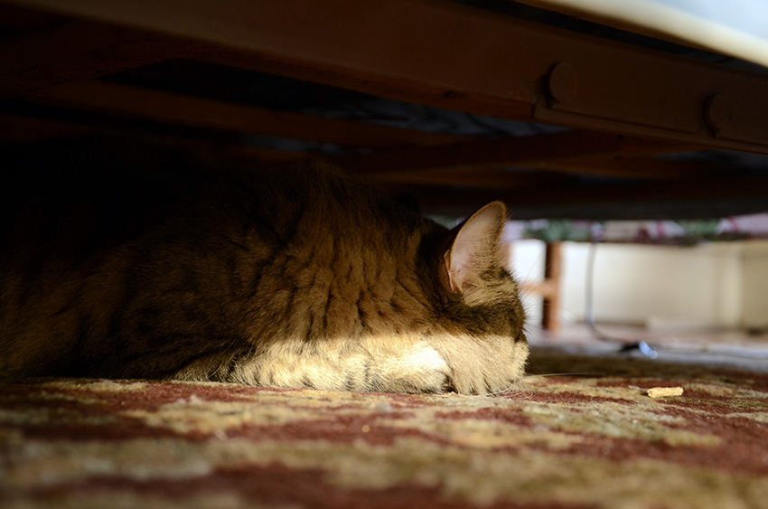 This is where she's been ever since I turned on the ceiling fan two hours ago. Under the bed. (Click to up-rez.)