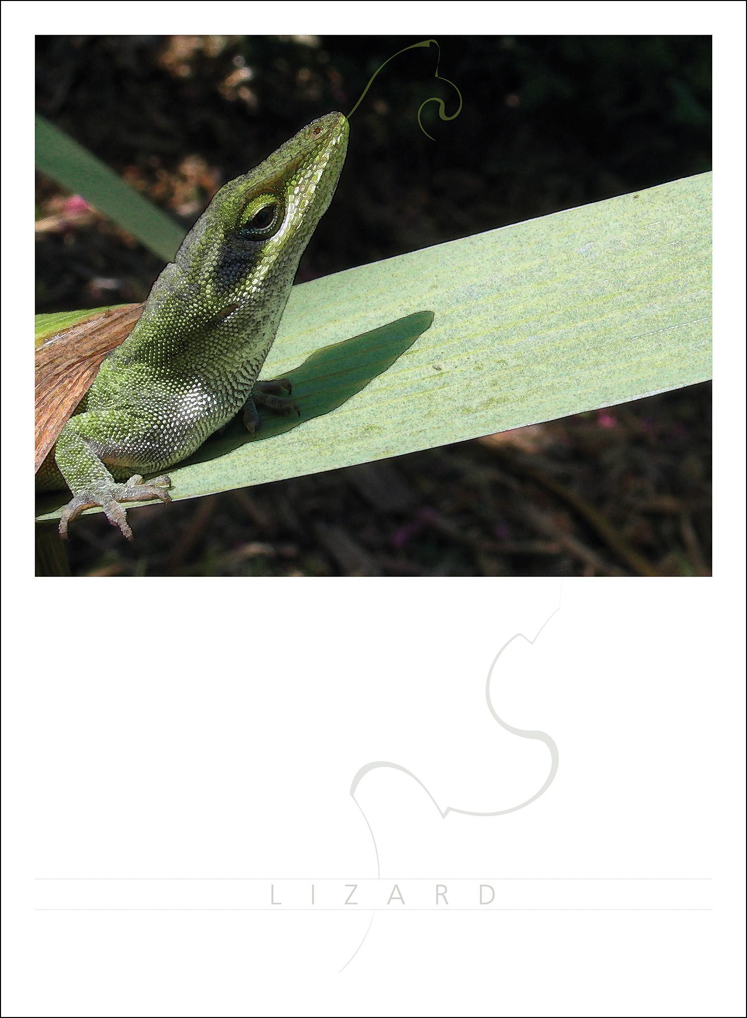 160709-lizard